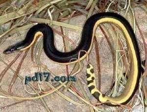世界上最可爱蛇排名_Top10:世界上最毒的十种蛇 - 一起盘点网