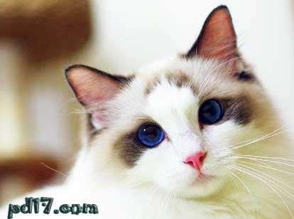 世界上最可爱的十种猫