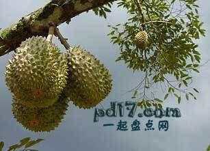 长相怪异的水果Top8:榴莲