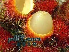 长相怪异的水果Top4:红毛丹