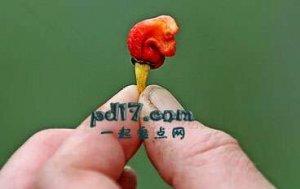 世界上最辣的辣椒:龙息辣椒