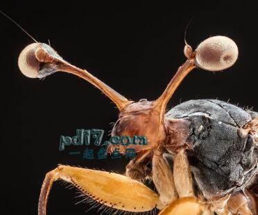 动物令人难以置信的眼睛Top5:潜蝇